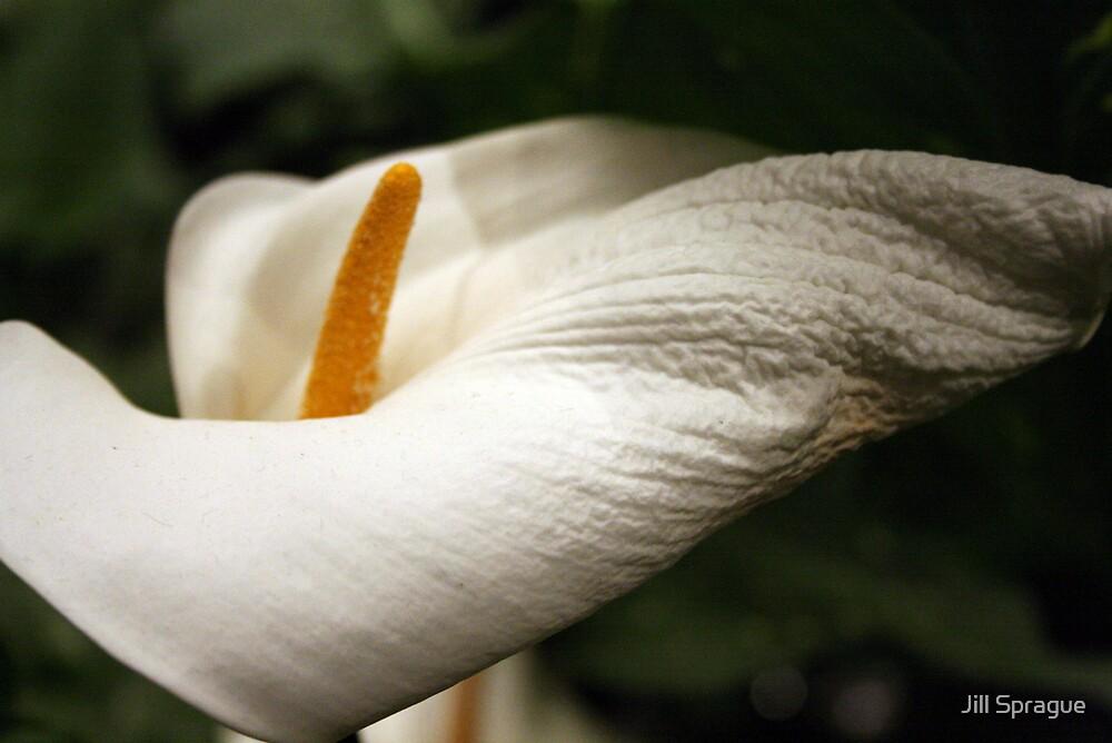 White by Jill Sprague