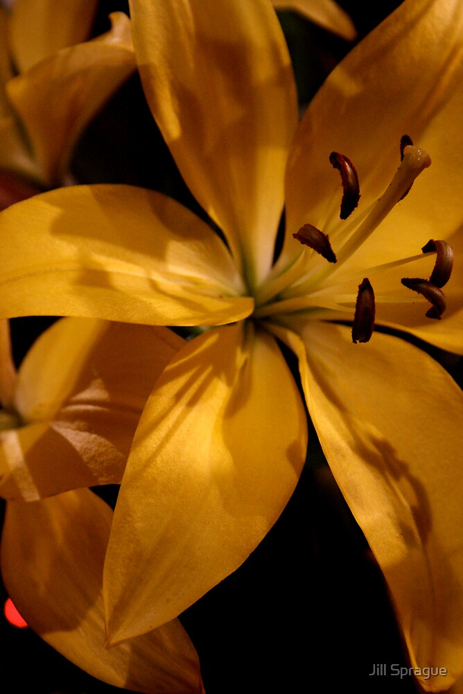 Yellow Lily by Jill Sprague