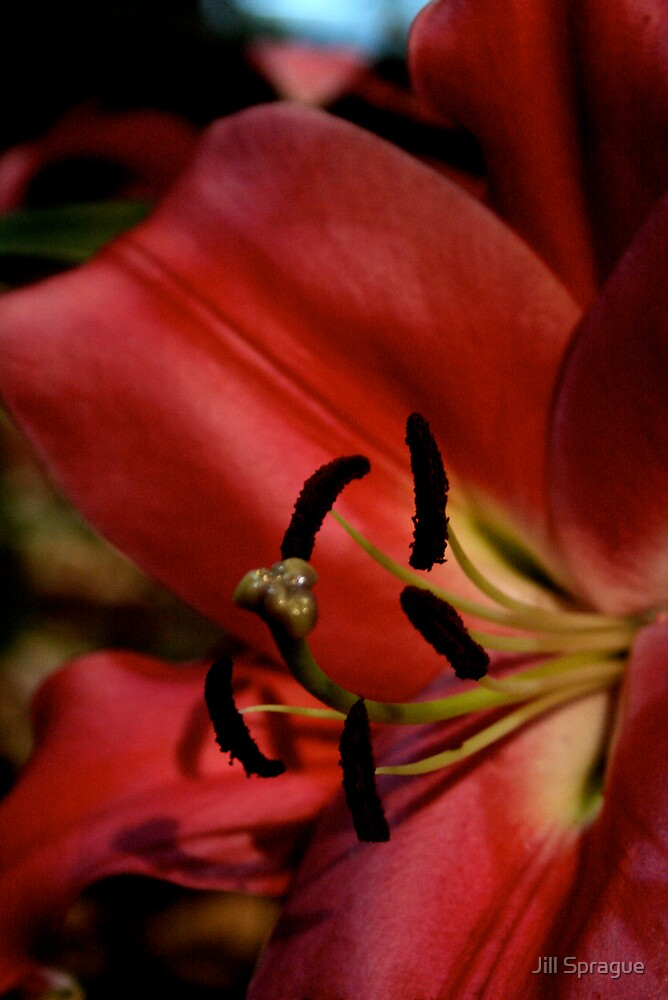Red's Lily by Jill Sprague