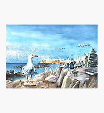 Seagull In Essaouira Photographic Print