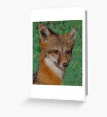 Gray Fox Greeting Card