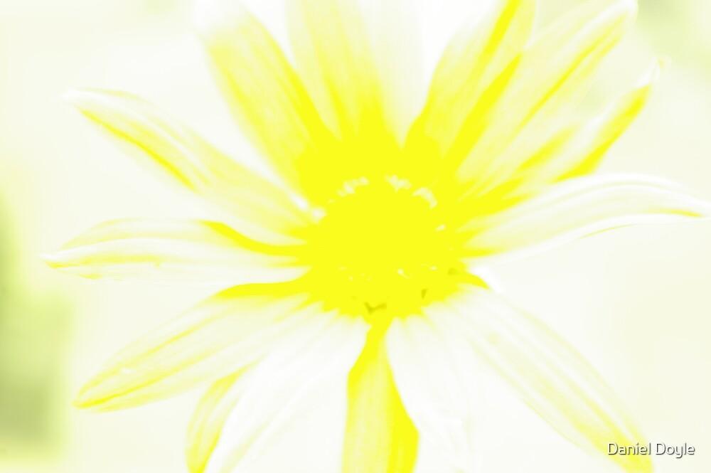 Negative Sunflower by Daniel Doyle