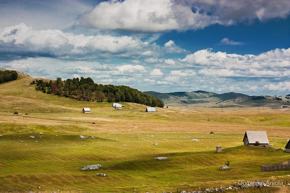 Fields of piece by Dominika Aniola