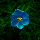 Blue Flower by footyman