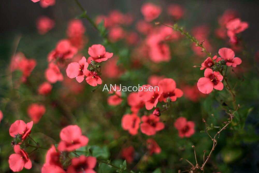 little pinks by ANJacobsen