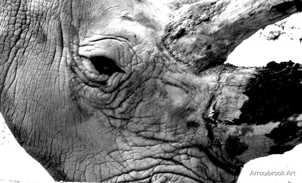Rhino by John Brotheridge