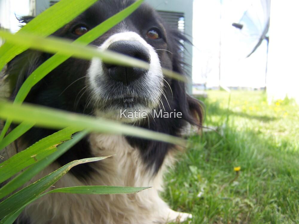 Puppy Through The Grass by Katie  Marie