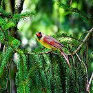 Watch the birdy... by Lisa Brower