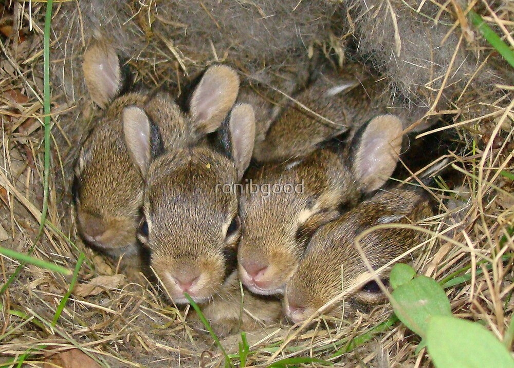 Bunny Babies. by ronibgood
