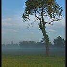 Tree In Morning Mist by Bridges
