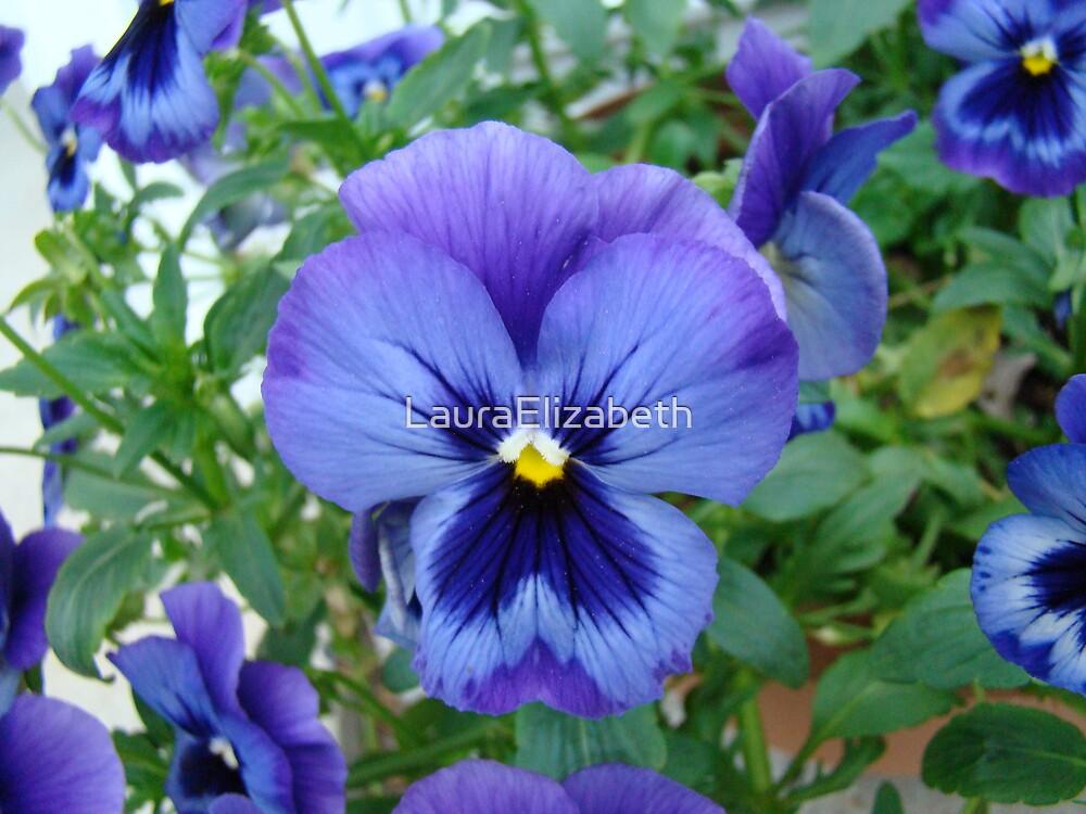 Purple Pansies by LauraElizabeth