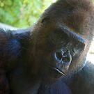 Gorilla by lindsycarranza