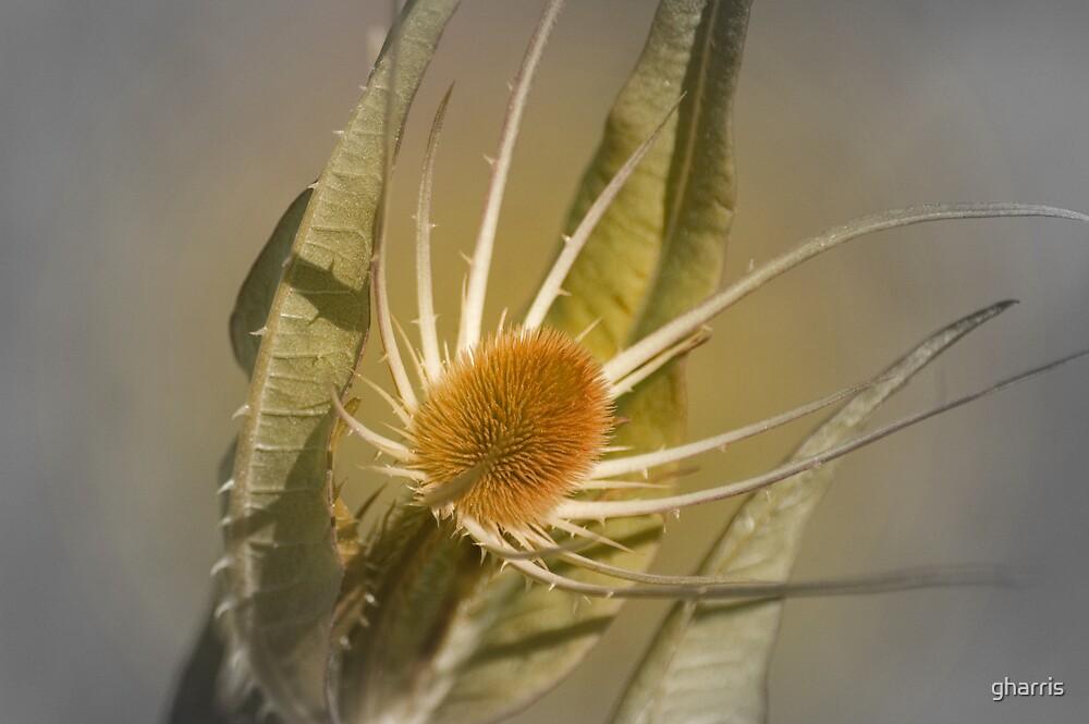 Beautiful Weed by gharris