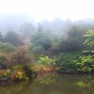 Lake, Mt Tomah Botannical Gardens, Blue Mountains by Catherine Davis