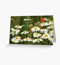 Cutleaf Daisies - Wildflowers Greeting Card