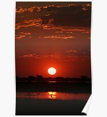 Sunset - Chobe National Park Poster