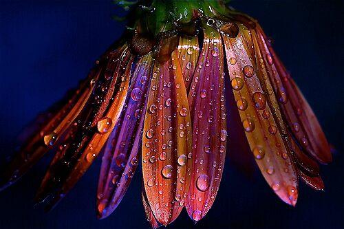 waterdrops by alfarman
