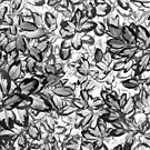 Leaves Black & White by suzanneran