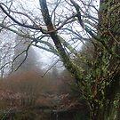 Tree and Lichen by Catherine Davis
