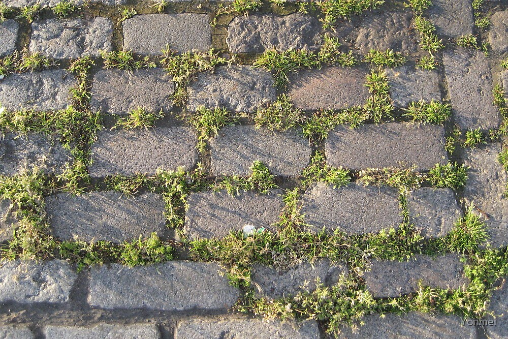 Grass in the cobbles by Yonmei