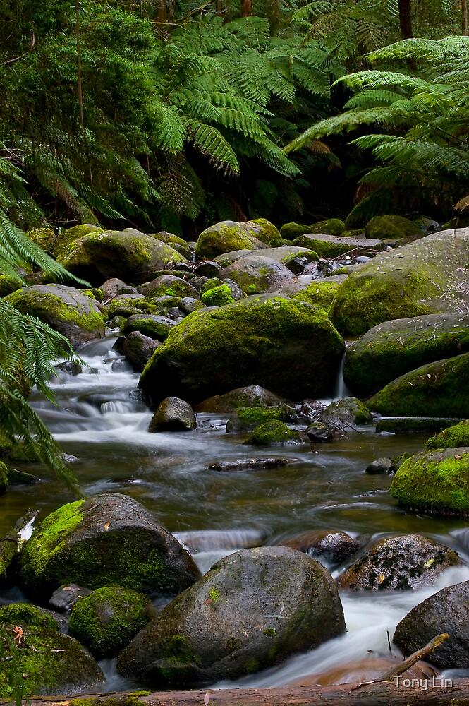 A Stream Near Mt Baw Baw by Tony Lin