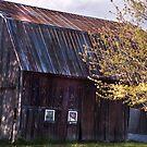 Tha barn- my favorite subject! by cherylc1