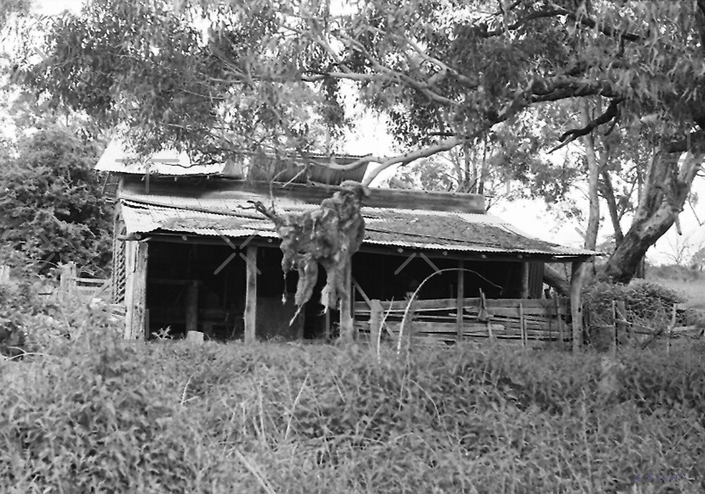 The Old Woolshed, Trunkey Creek, NSW. by C J Lewis