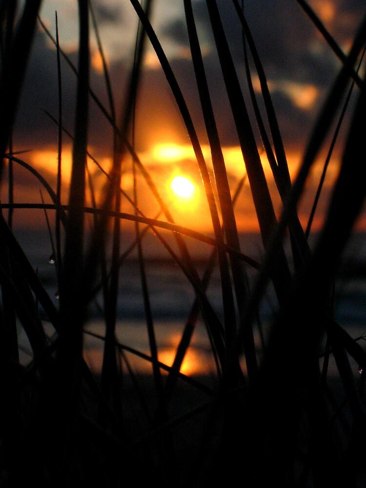 Brunswick Head Sunrise by Peter Merten