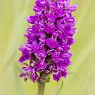 Wild Orchid by OpalFire