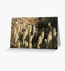 Outback Flowers Greeting Card