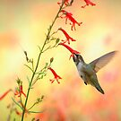 Mountain Hummingbird by K D Graves Photography