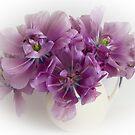 Purple tulips  by eddiej