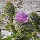 Thistle On The Thistle by Stuart  Fellowes