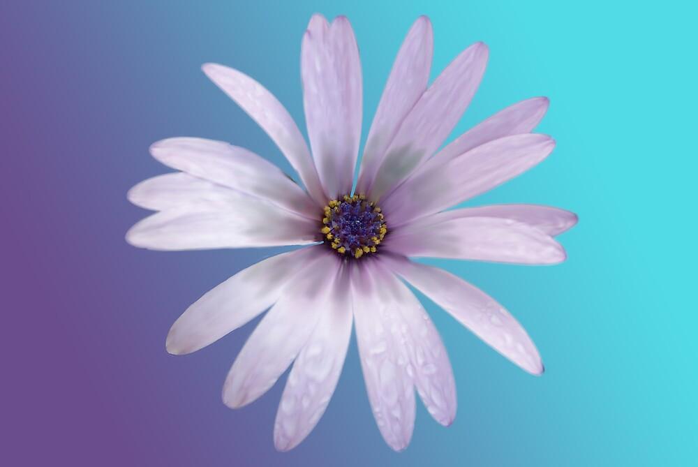 flower pic by David Grubisa