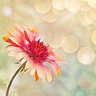Summer Bliss by Linda Lees