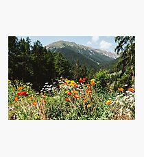 Mountain garden Photographic Print