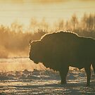 Bison Silhouette by Dominika Aniola