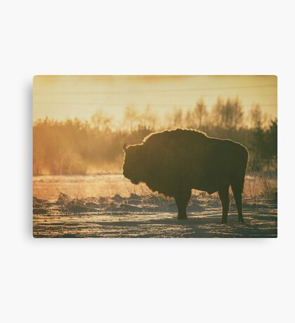 Bison Silhouette Canvas Print