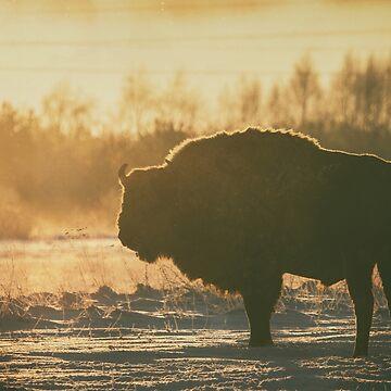 Bison Silhouette by domcia