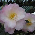 Delicate beauty by Susan Moss