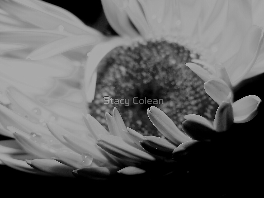 Beauty in the Shadows by Stacy Colean