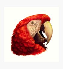 Scarlet Macaw Parrot realistic painting Art Print