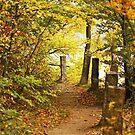 Autumn 11 by Dominika Aniola