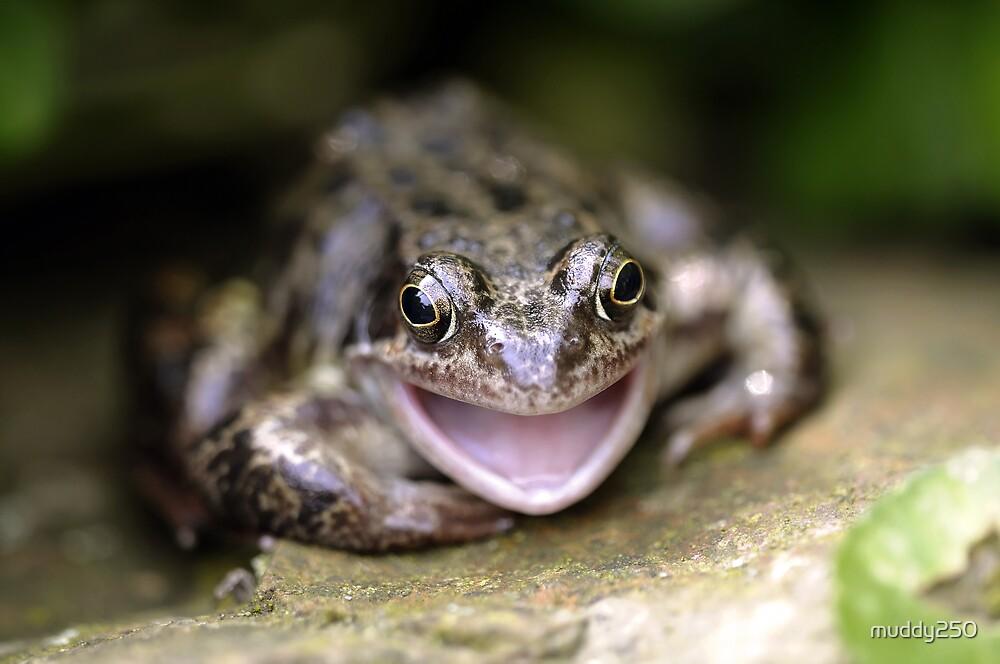 Happy Frog by Chris Charlesworth