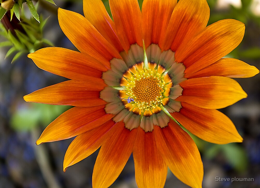Sun burst by Steve plowman