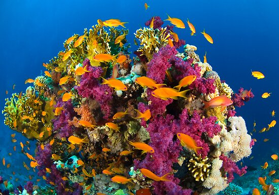 Coral Reef by Carlos Villoch