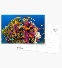 Coral Reef Postcards
