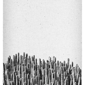 Cacti 03 von froileinjuno