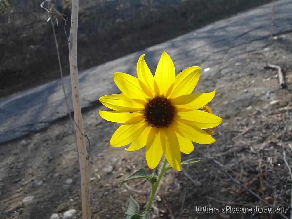 A Sun-Lit Pixie by Imthenats Photography