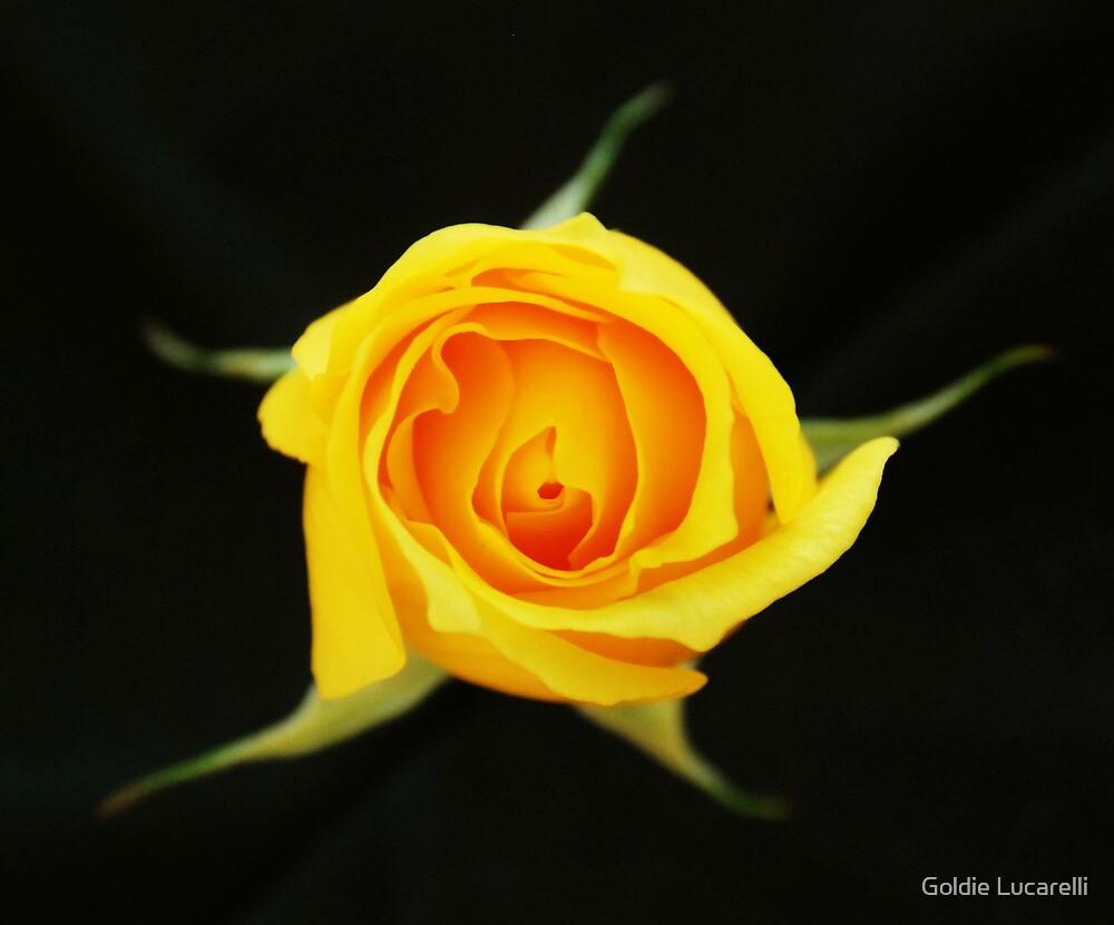 Last Bloom  by Goldie Lucarelli
